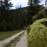 Der zweite Teil des Rückweg führt entlang eines Forstweges