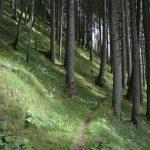 Der Beginn der Wanderung zum Allwartstein führt durch moosbedeckten Wald