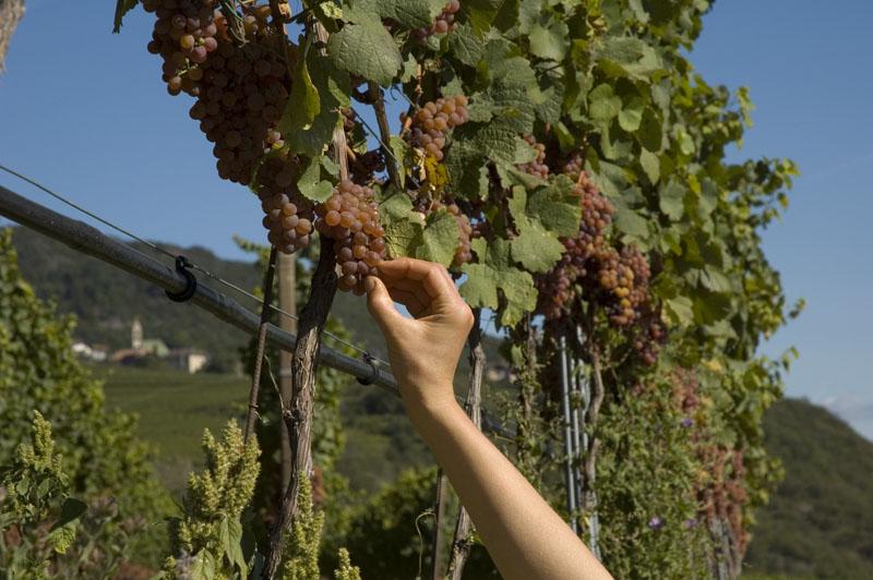 Weinbaugebiet Kaltern