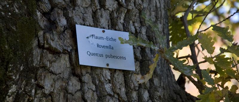 Die Beschriftung gibt Einblicke in die Pflanzenwelt des Biotops Castelfeder