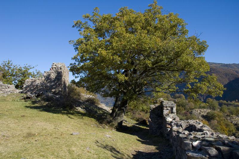 Flaumeichen und Ruinen im Biotop Castelfeder