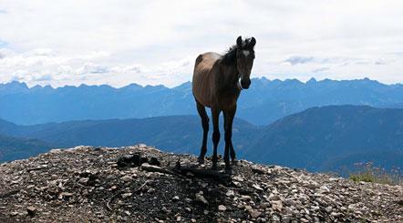 Pferd auf dem Schwarzen Kopf