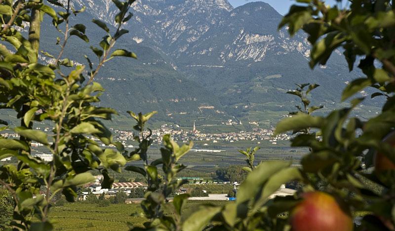 Apfelbäume im Südtiroler Unterland