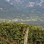Weinbaugebiet Kalterer See