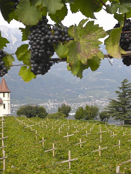 Weinbau im Süden Südtirols
