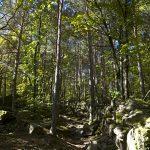 Herbststimmung auf dem Weg zu den Eislöchern zwischen Eppan und Kaltern