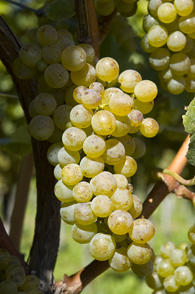 Weinbaugebiet in Südtirols Süden