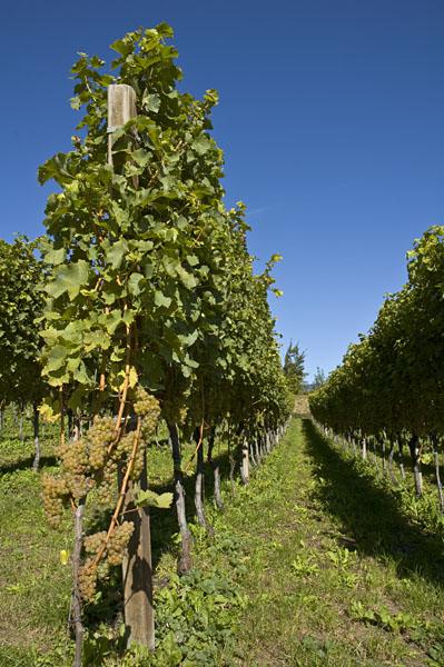 Eppan und Kaltern   Weinbaugebiete in Südtirols Süden