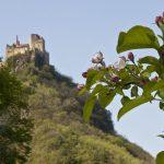 Burgen Wanderung durch Obstplantagen