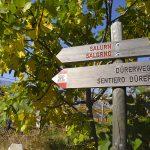Wanderung Salurn Haderburg Buchholz