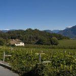 Weinbau in Südtirols Süden