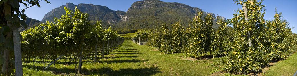 Weinbau und Apfelplantagen in Südtirols Süden
