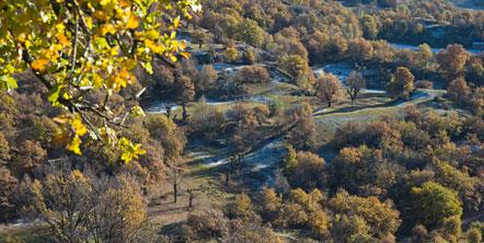 Die Landschaft rund um Castelfeder. Wiesen die von alleinstehenden urigen Eichen durchsetzt werden.