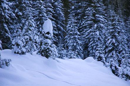 Schneeschuhwandern zum Petersberger Leger