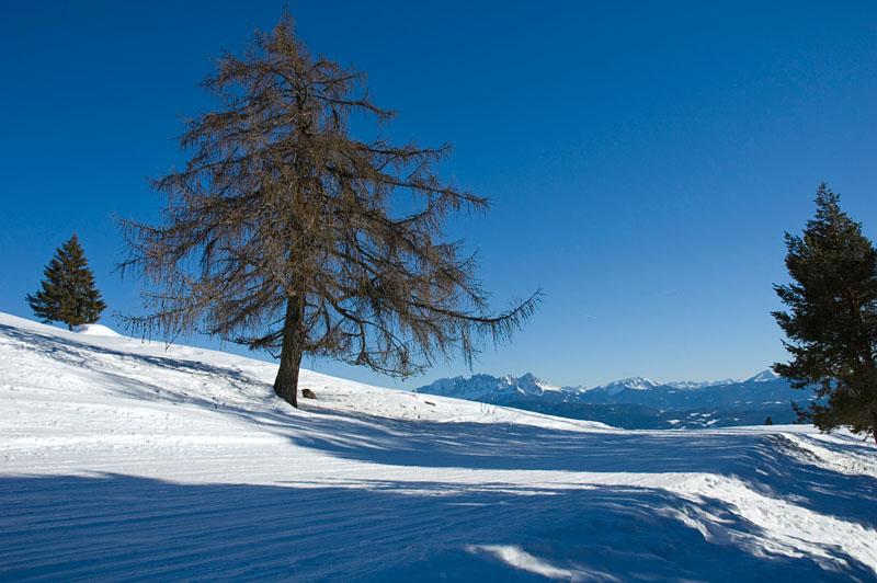 Schneeschuhwanderung Rittner Horn
