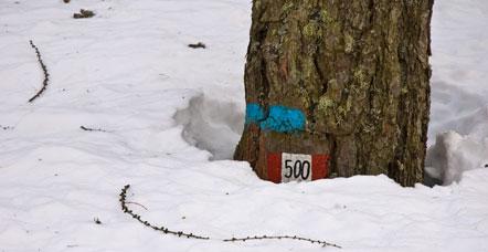 Schneehöhe bis zur Wegmarkierung (Fennberger Joch)