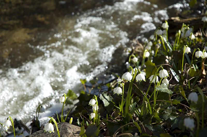 Frühlingstal Montiggl