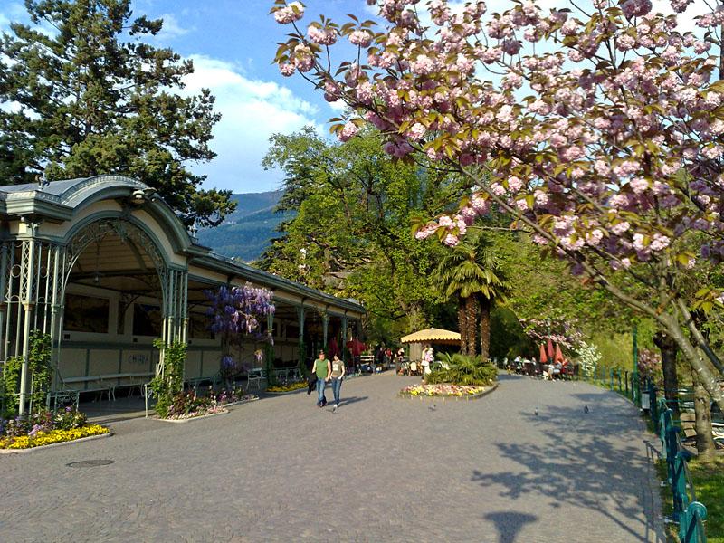 Magnolienblüte an der Passerpromenade in Meran