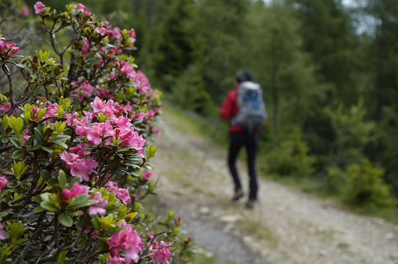 Rundwanderweg im Naturerlebnisgebiet Tschiernock Hochpalfennock