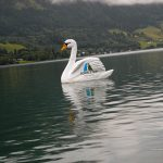 Der Zeller See ist auch Heimat vieler Tiere