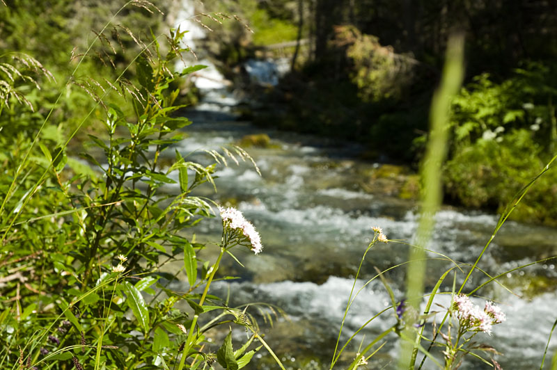 Am Sarca Fluss entlang