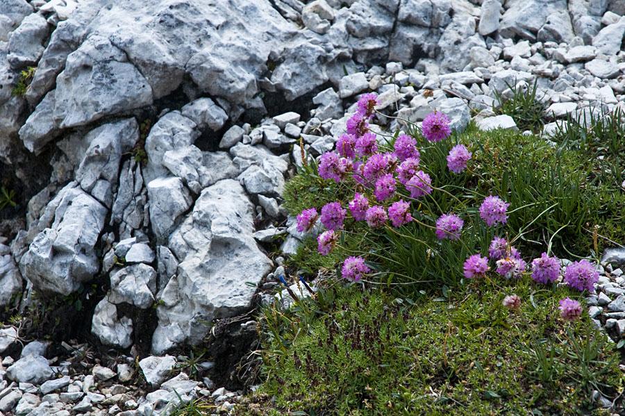 Flora der Dolomiten