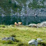 Am lago delle stellune