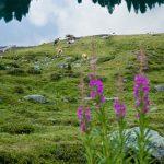 Farbenfrohe Bergflora