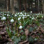 Frühlingstal in Südtirols Süden
