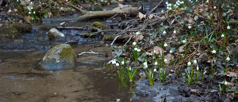 Wandern im Frühlingstal