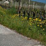 Abgrenzung der Weinbaugebiete