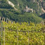 Weinbaugebiet Bozen