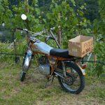 Motorrad im Weinberg bei Bozen