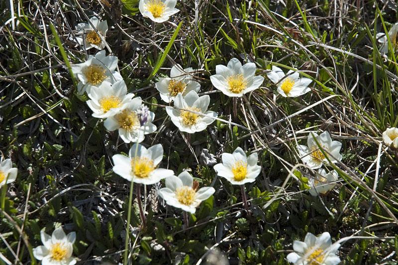 Dolomiten Flora