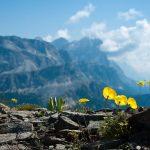 Flora Wanderung Col di Lana