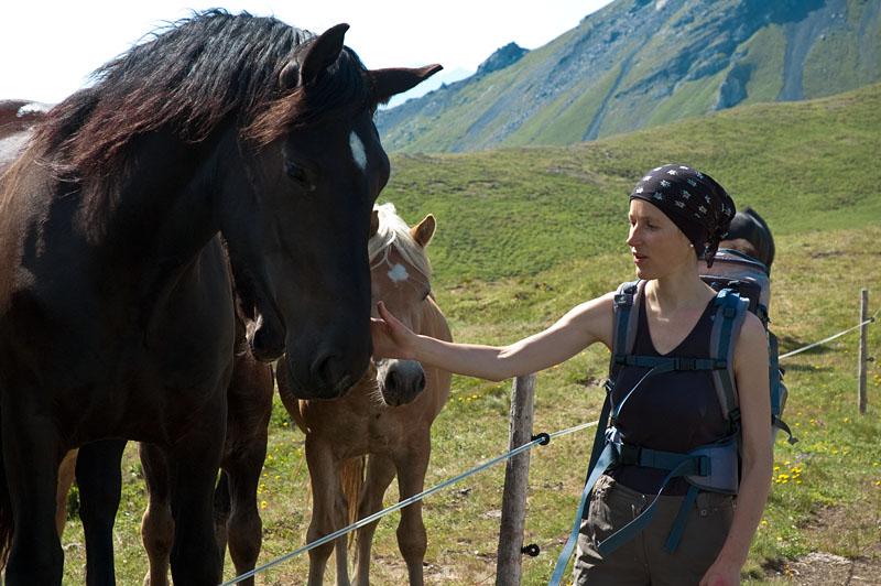 Pferd bei der Wanderung Col di Lana
