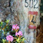 Wanderweg Schwarzhorn