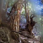 Wald im Burrone Klettersteig