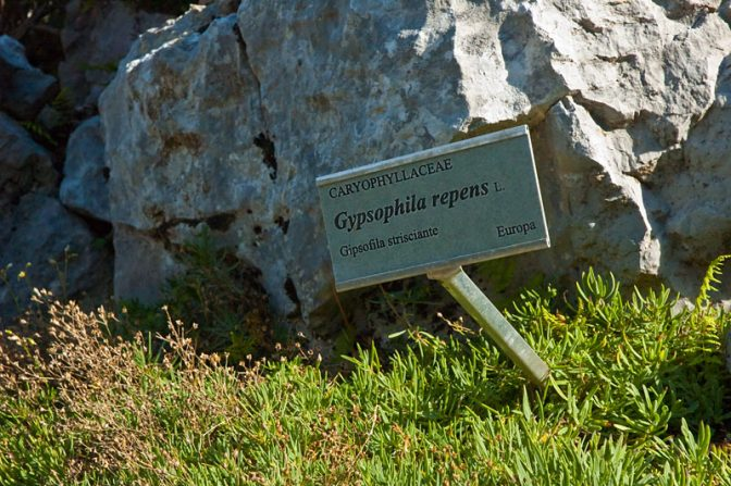 Giardino Botanico Viotte am Monte Bondone