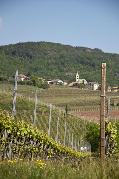 Weinwandertag Kaltern 03