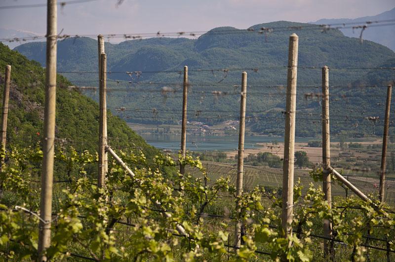 Weinwandertag Kaltern 04