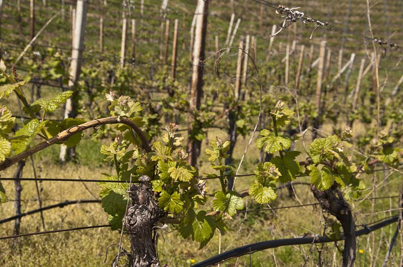 Weinwandertag Kaltern 25