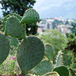 Taken at Latitude/Longitude:46.505947/11.332004. 1.20 km South Gries Trentino Alto Adige Italy  (Map link)