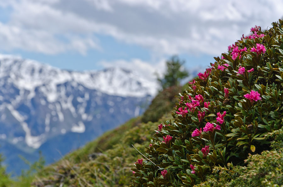 Taken at Latitude/Longitude:46.650626/10.866019. 3.82 km North Latsch Trentino Alto Adige Italy  (Map link)