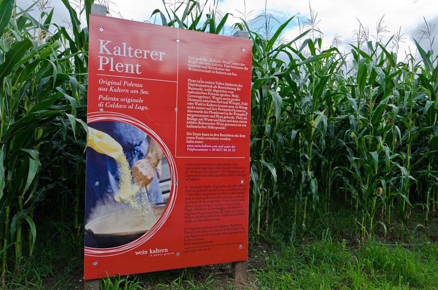 Kalterer Plent 01