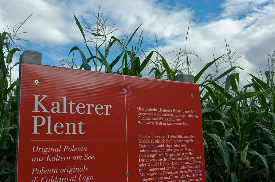 Kalterer Plent 02