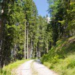 Oberplankenwald