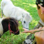 Ponys am Antholzer See 01