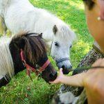 Ponys am Antholzer See 02