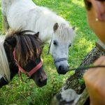 Ponys am Antholzer See 03